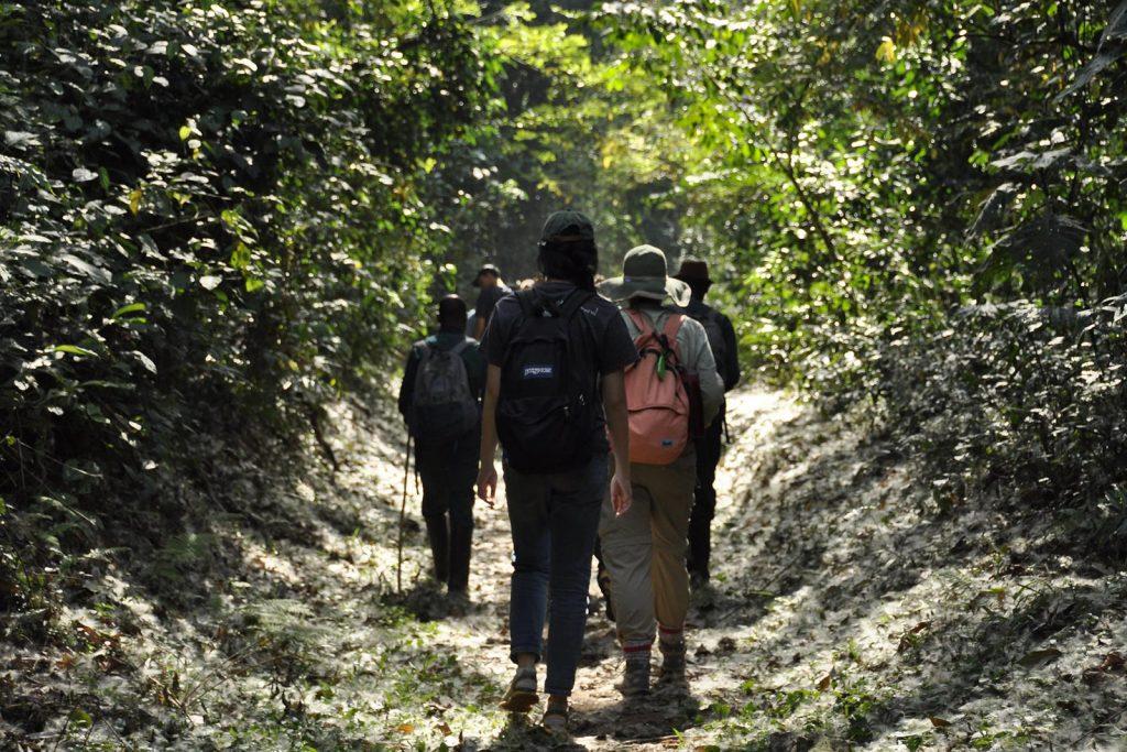 Kibale Forest Chimps
