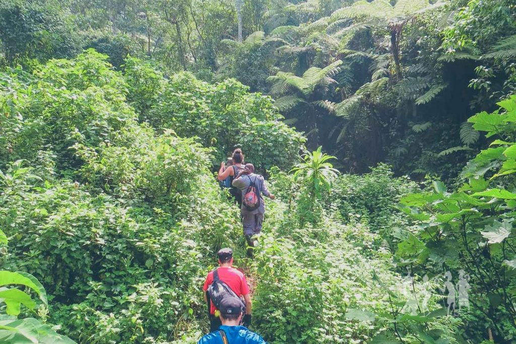 The Best Time To Go on Gorilla Safari in Uganda - Trekking through the thick misty jungles to find the mountain gorillas.