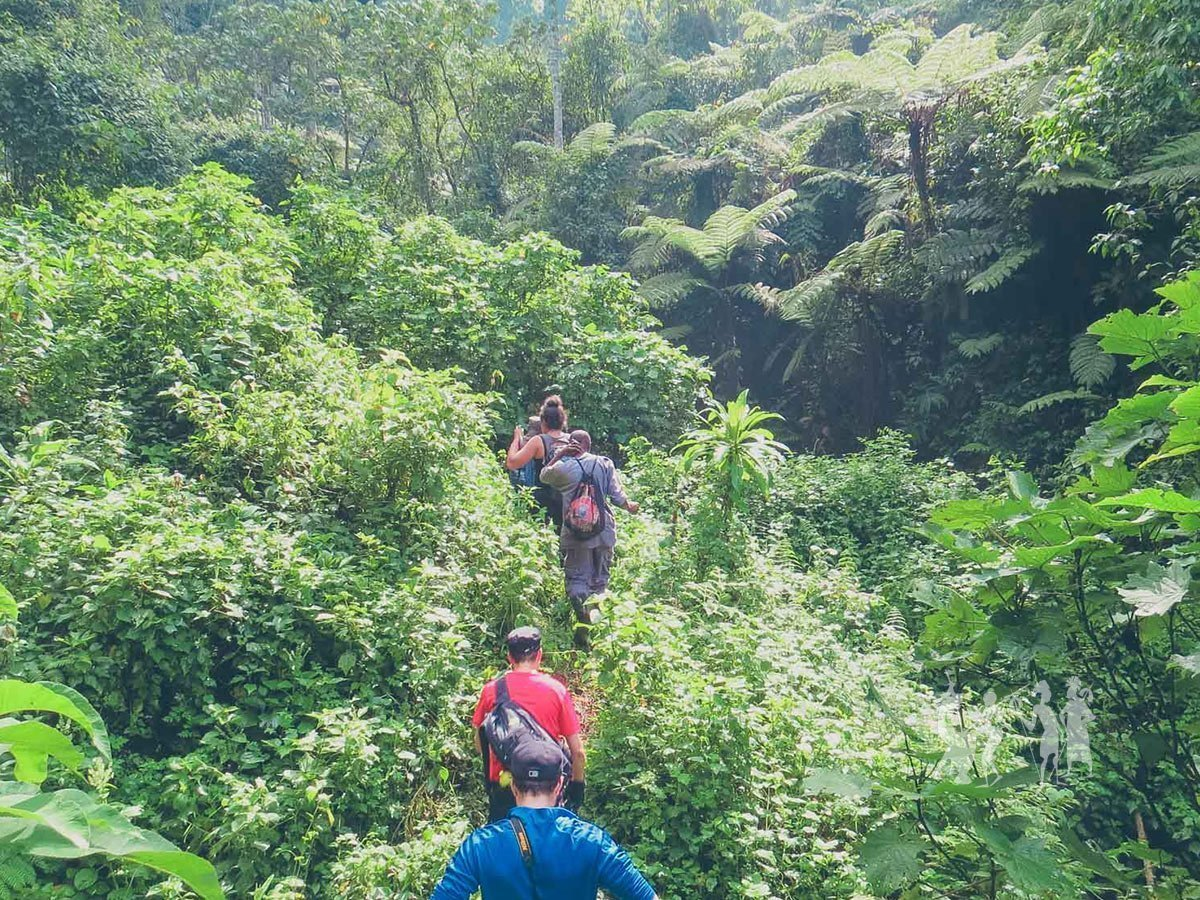 Day 5: Hike across Bwindi Impenetrable Forest and Queen Elizabeth National Park