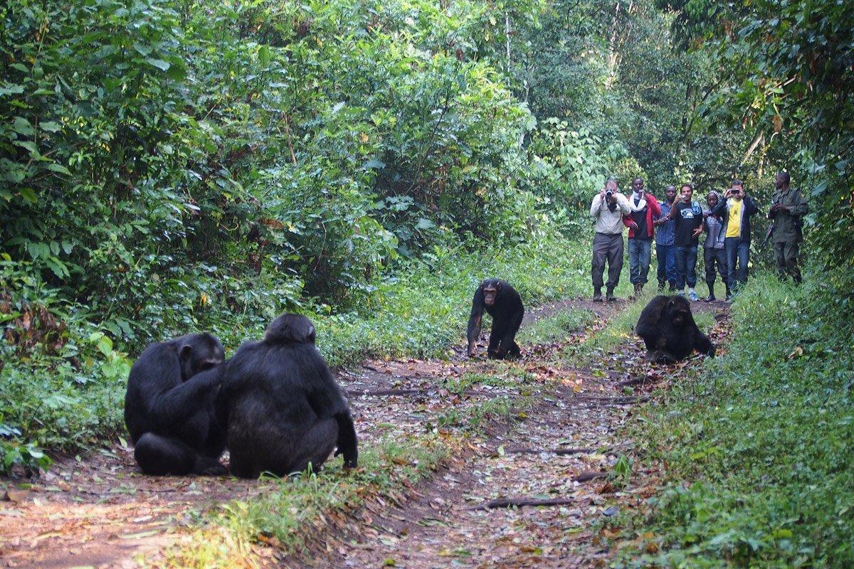 Day 9: Chimpanzee Tracking and Bigodi Nature Walk