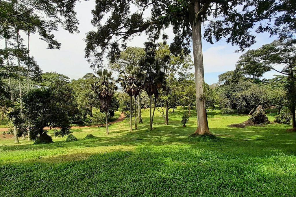 Botanical Gardens in Entebbe