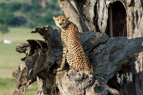 Kidepo Jungle Safari