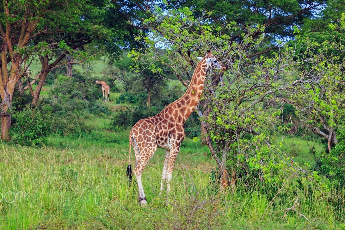 Day 10: Northbound to Murchison Falls National Park