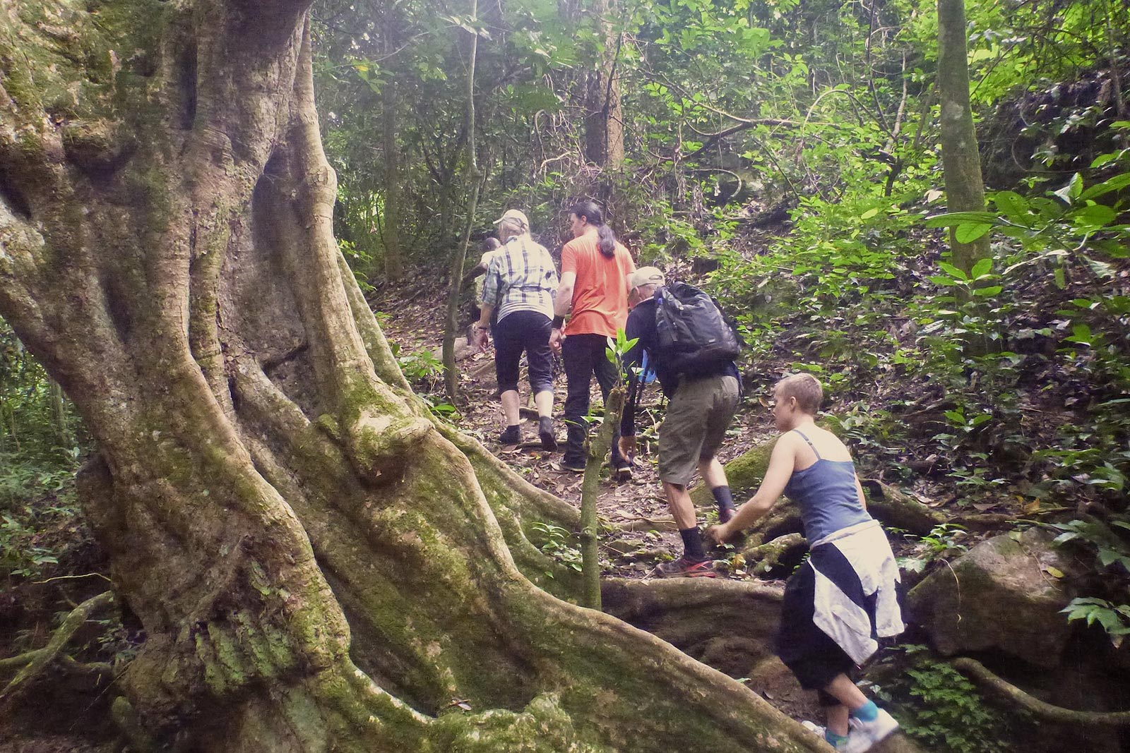 Day 6: Hike Adventure Across Bwindi Impenetrable Forest