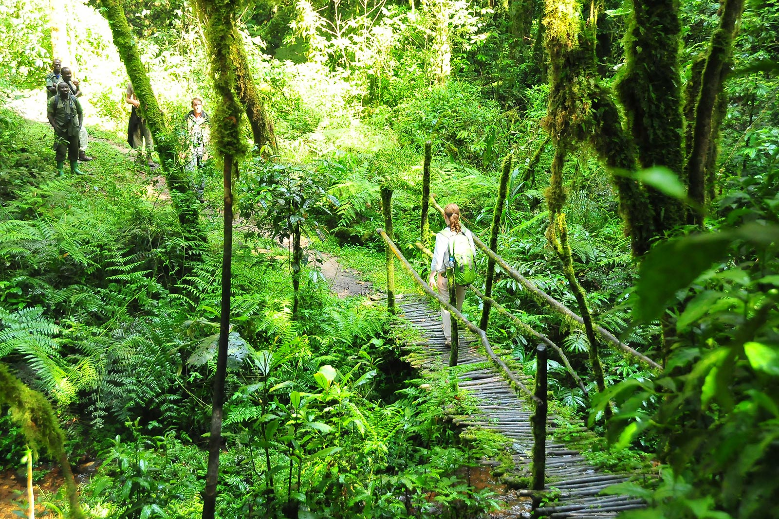 Day 5: Hike Across Bwindi & Transfer to Queen Elizabeth National Park