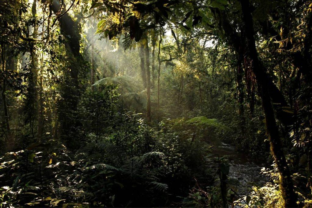 Sun pierces through Bwindi forest canopy
