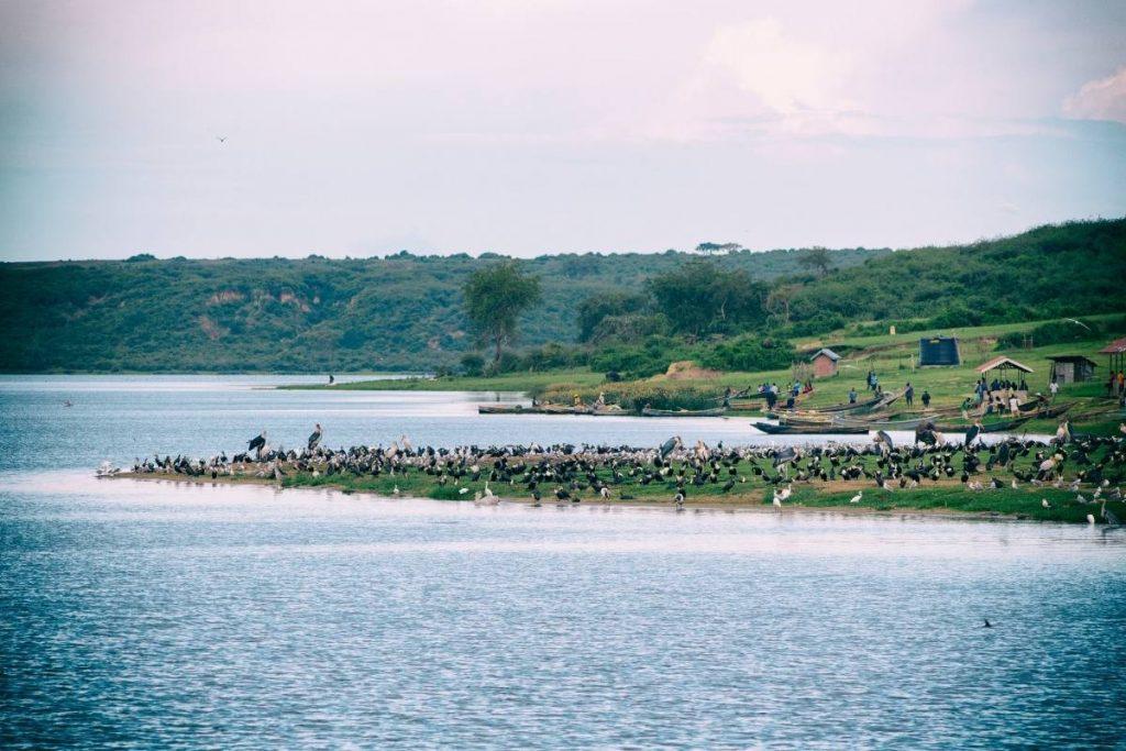Birds, hippos and crocs adorne the Kazinga Channel in Queen Elizabeth National Park, Top Destination in Uganda