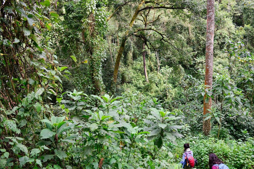 Trekking The Impenetrable Jungles of Bwindi, Home of The Gorillas in Uganda - current status of uganda tourism industry
