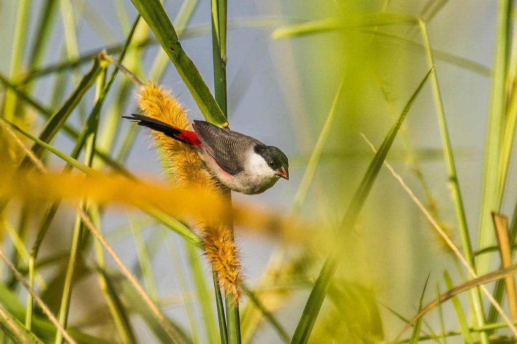 Over 1000 bird species are found in Uganda.