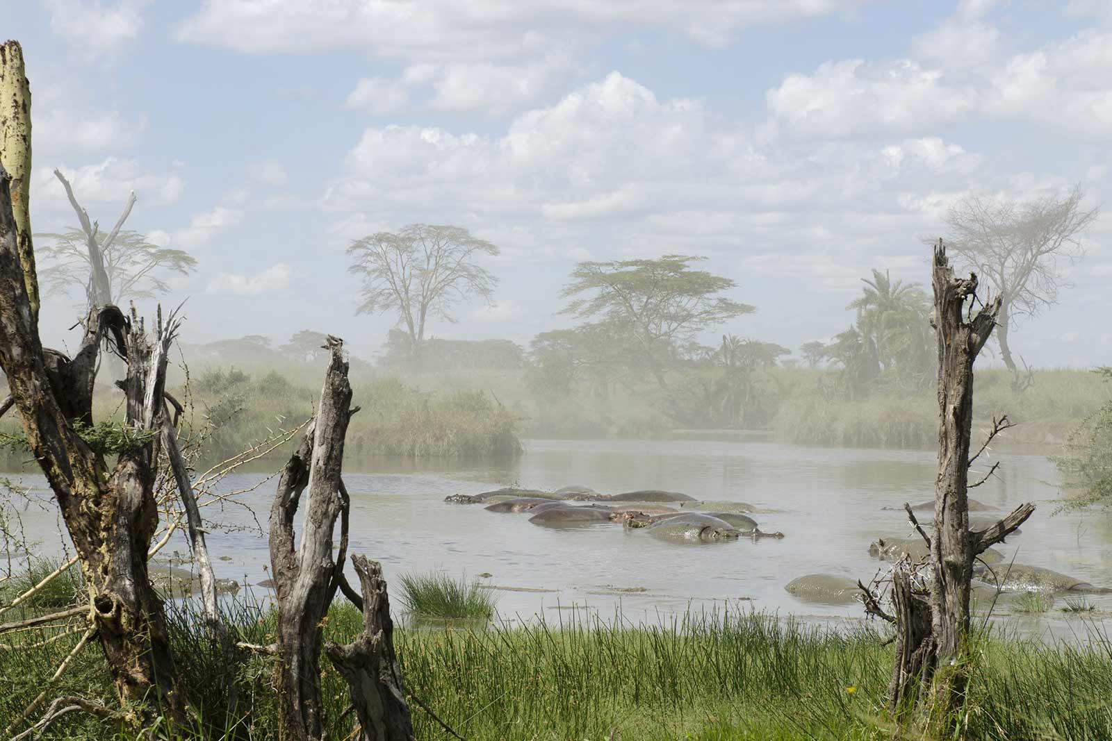 Hippos in uganda