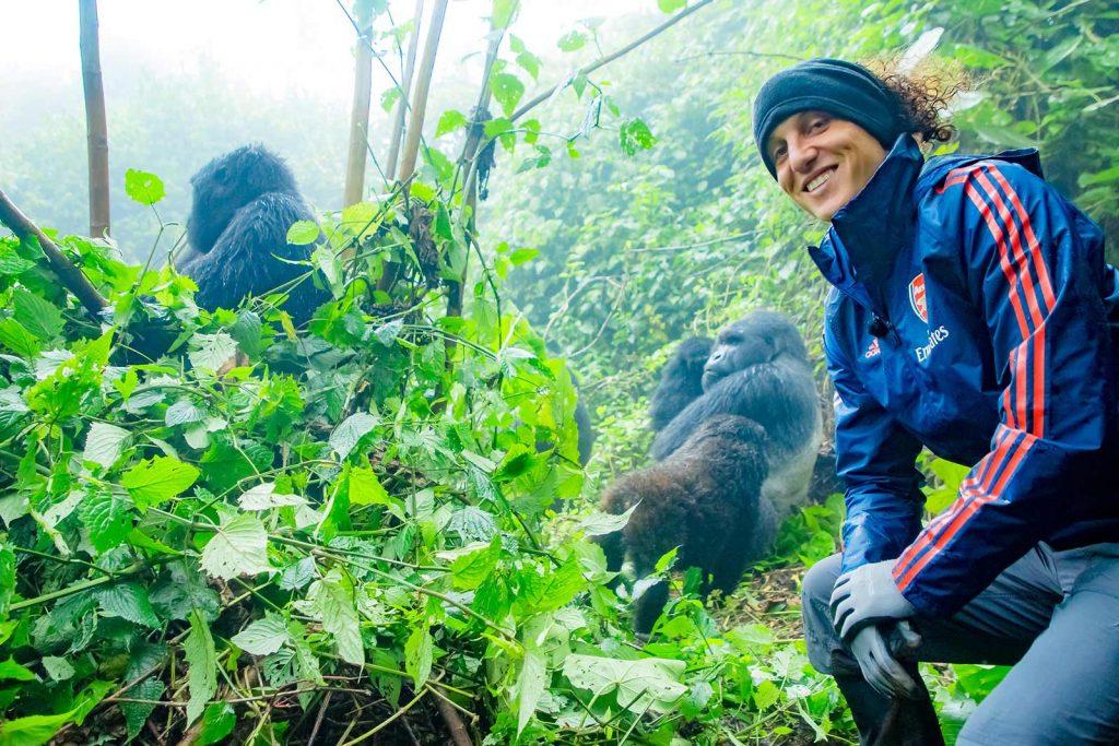 How to see mountain gorillas