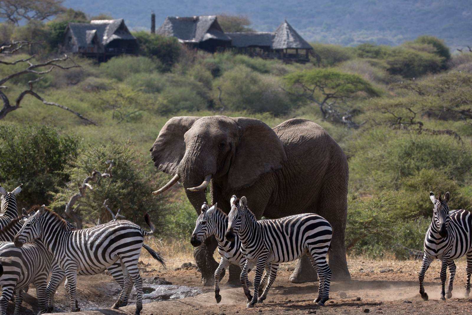 Choosing the right safari activities that fall under your budget