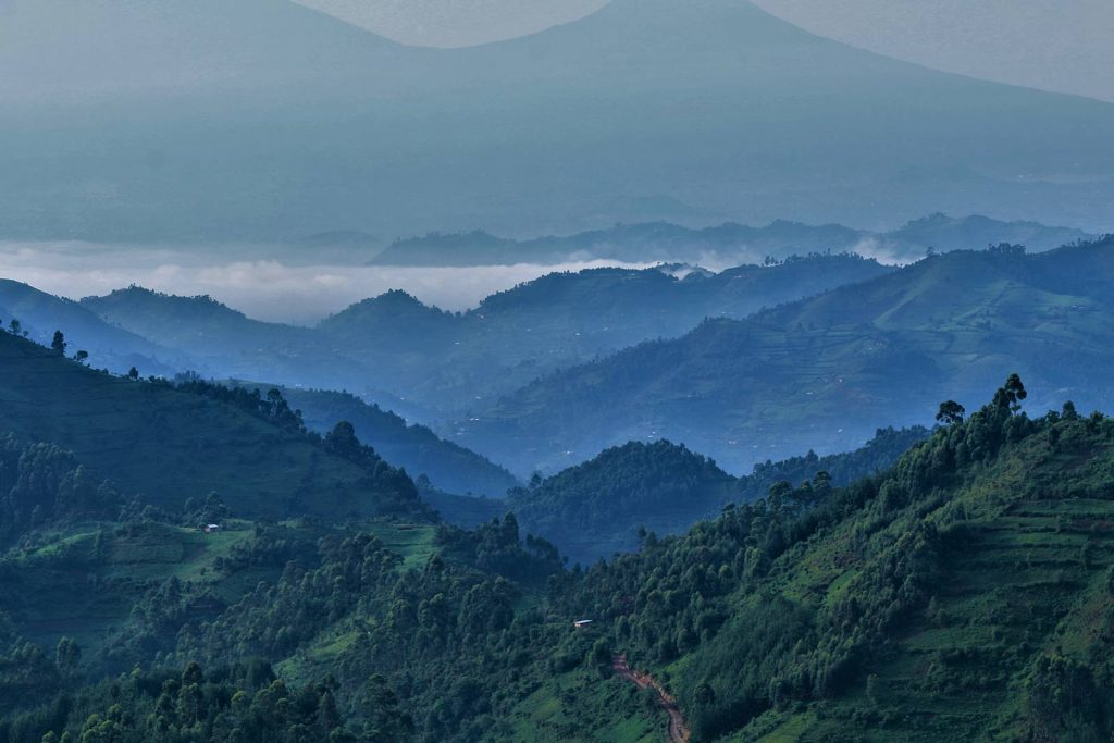 Where To See Mountain Gorillas in Uganda. Bwindi Impenetrable National Park, one of the two gorilla sanctuaries in Uganda.