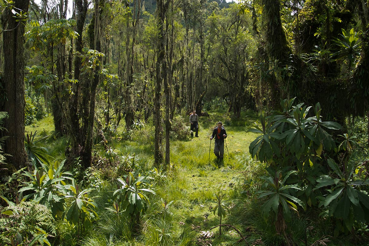 Hiking in Rwenzori: How else to travel on a budget in Uganda