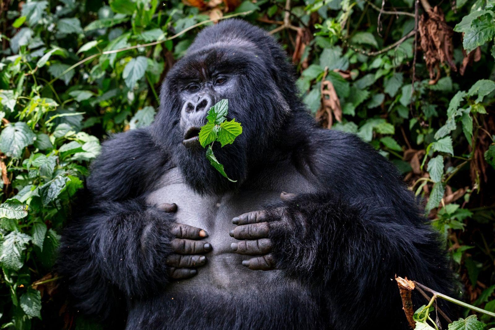 Day 3: Gorilla Trekking Adventure in Bwindi