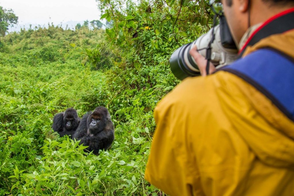 With the help of trackers, chances of finding the gorillas are almost guaranteed. Planning Your First Uganda Safari
