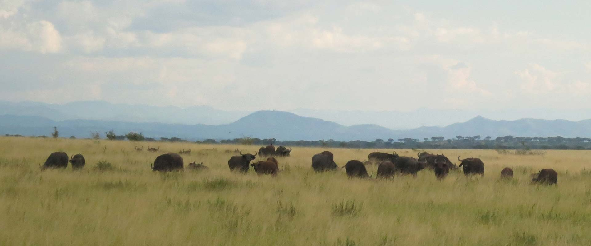 Queen elizabeth National Park landscape view of Rwenzori backdrop