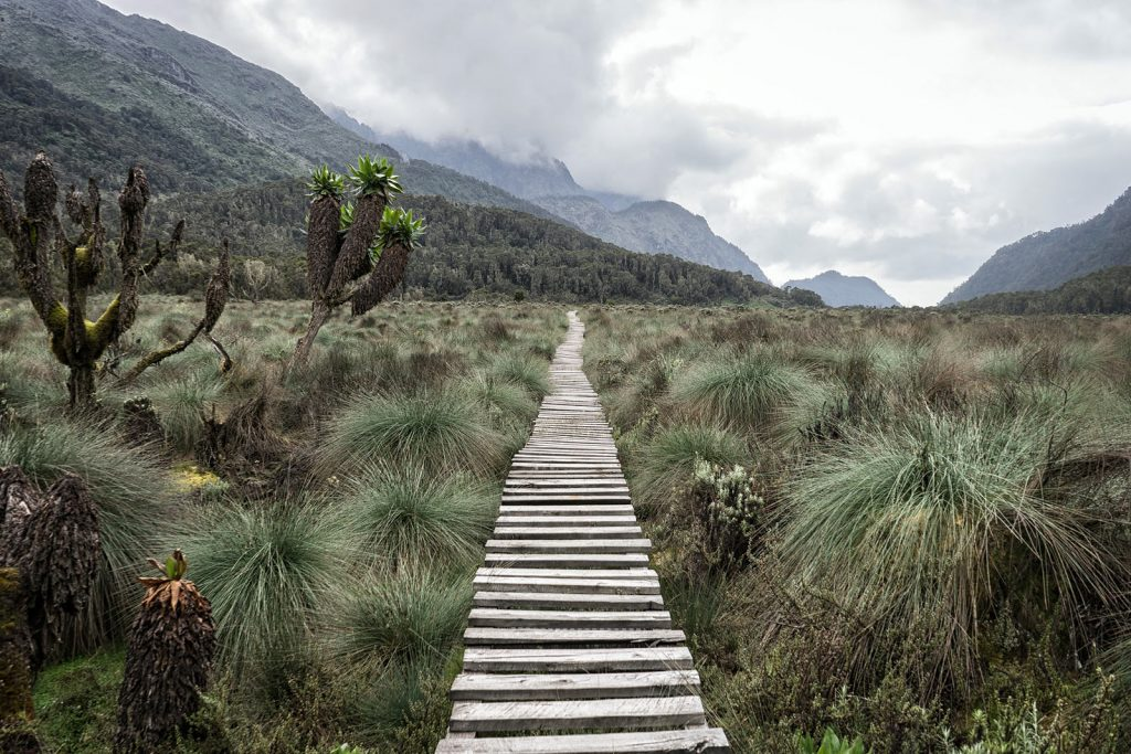 Rwenzori Trails