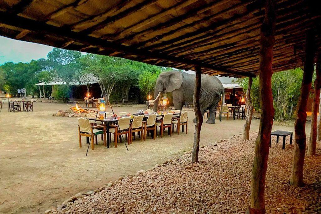 A surprise visit at Bush Lodge dinner, a low-cost safari camp near Kyambura Gorge - The alternative primate safari in Uganda without gorillas