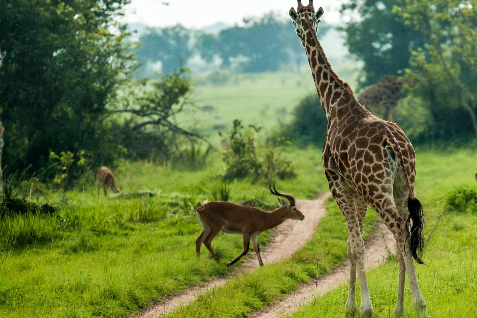 Day 10: North Bound to Murchison Falls National Park