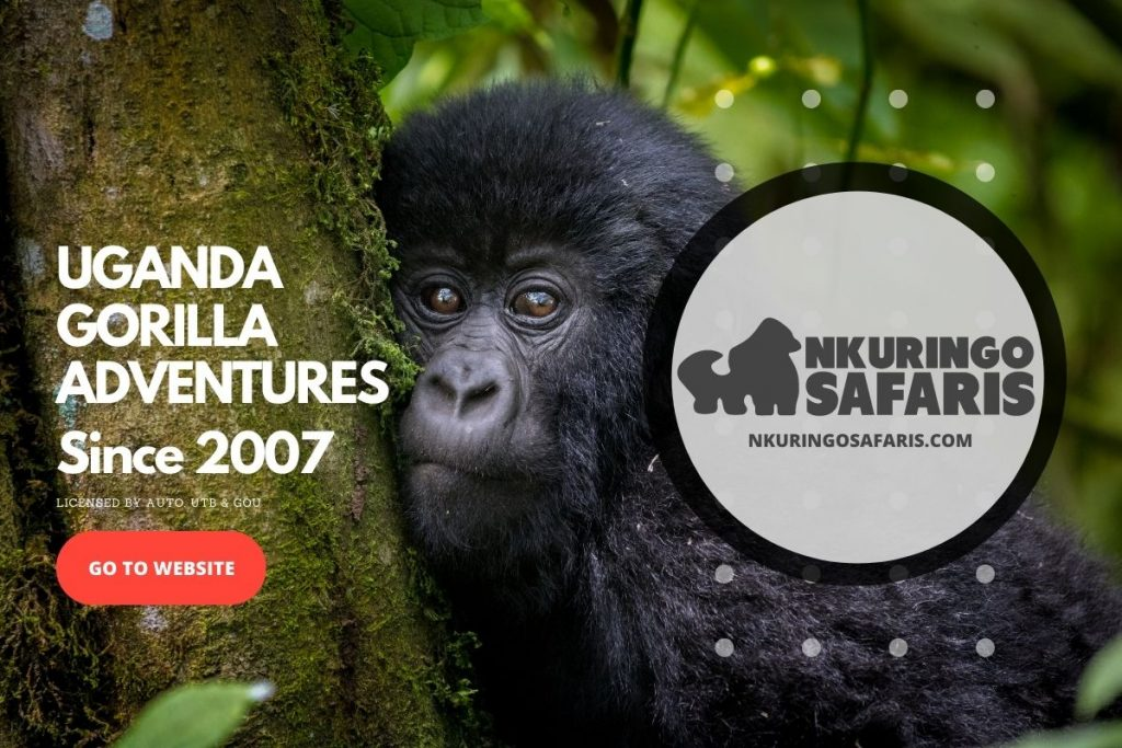AD: Uganda Gorilla Trekking Adventures by Nkuringo Safari