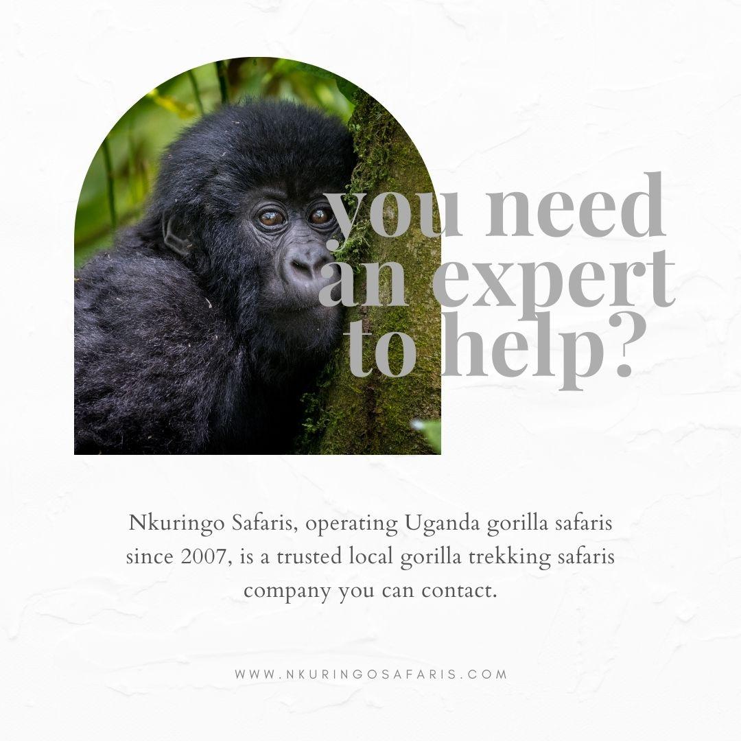 Expert local safari operator for planning a Uganda gorilla safari