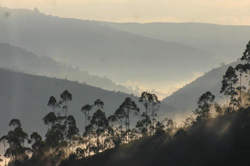 Gorilla Trekking in Bwindi Starts Very Early, Just After Sunrise