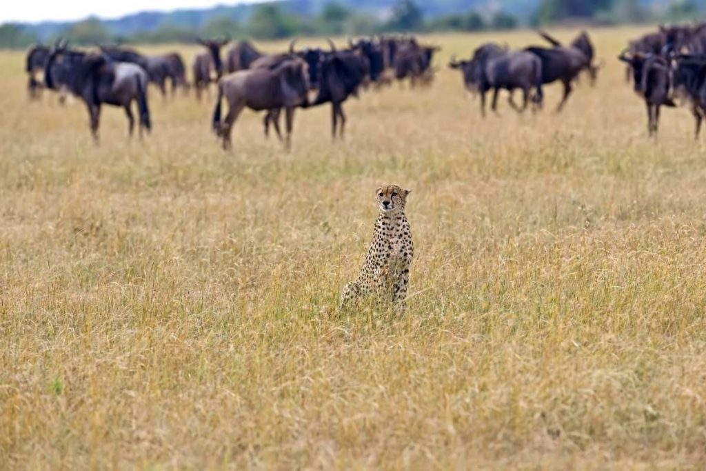 2. Maasai Mara National Reserve - Kenya popular destinations in east africa