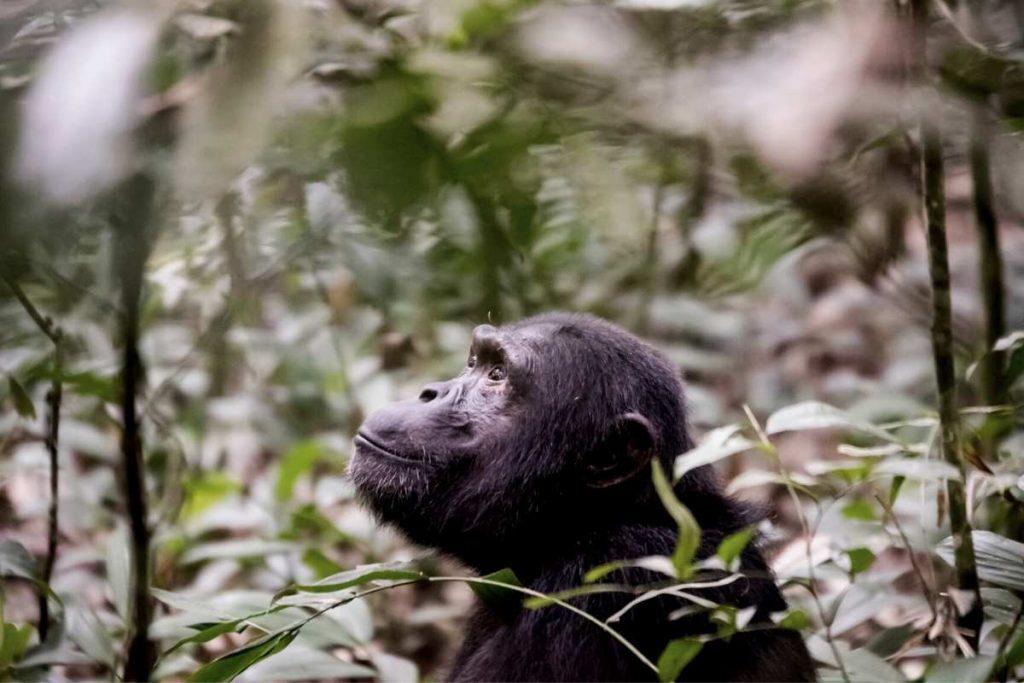Popular Safari Destinations in East Africa - 7. Kibale National Park - Uganda
