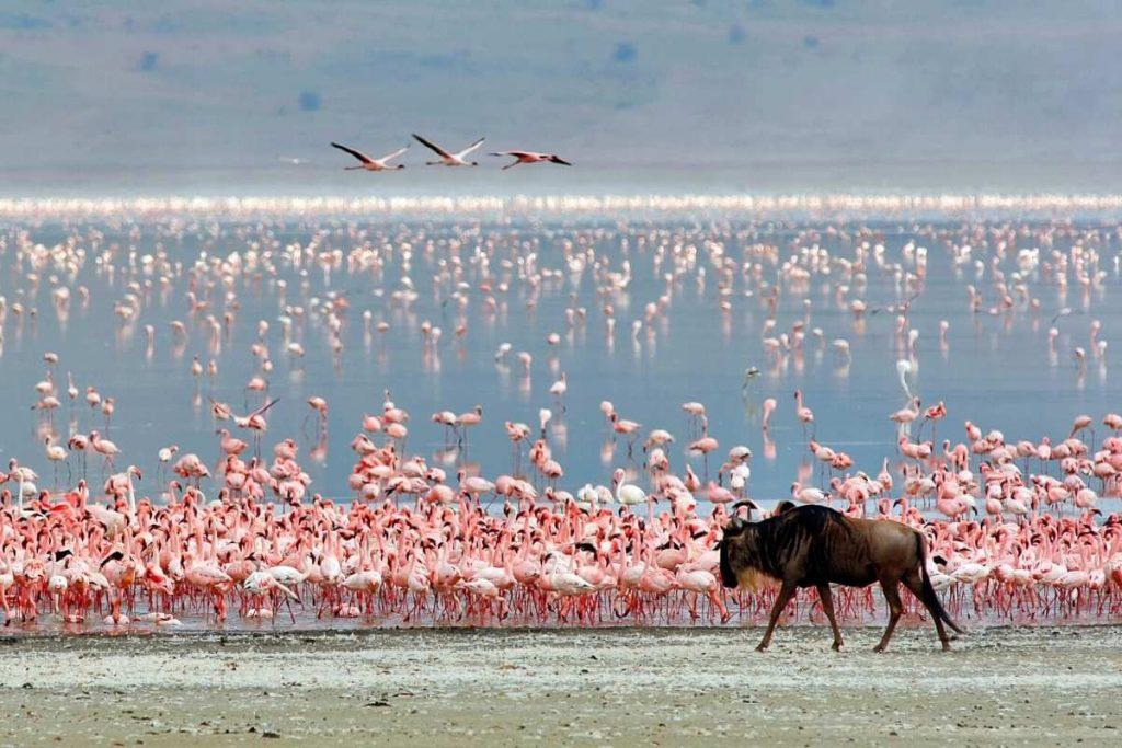 Ngorongoro Crator - Tanzania